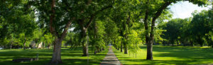 The Oval on a summer day with a tree lined sidewalk and bright green grass.